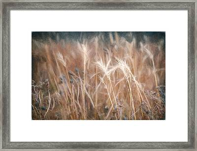 Native Grass Framed Print by Scott Norris