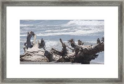 Natural Beach Bench Framed Print by Traci Hallstrom