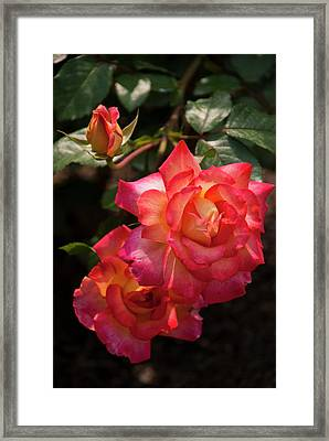 Natural Beauties Framed Print by Don  Wright