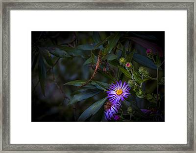 Natural Beauty Framed Print by Marvin Spates