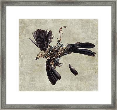 Natural Cycle Framed Print by Carol Leigh