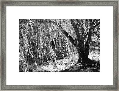 Natural Screen Framed Print by Gerlinde Keating - Galleria GK Keating Associates Inc