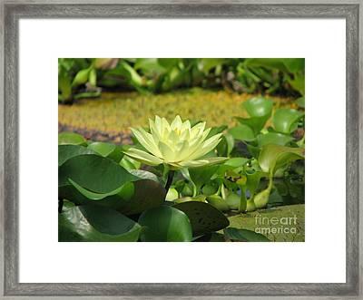 Nature Framed Print by Amanda Barcon