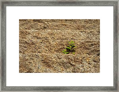 Nature Grows Framed Print by Karol Livote