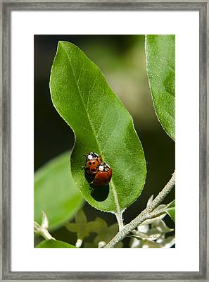 Nature - Love Bugs Framed Print by Christina Rollo