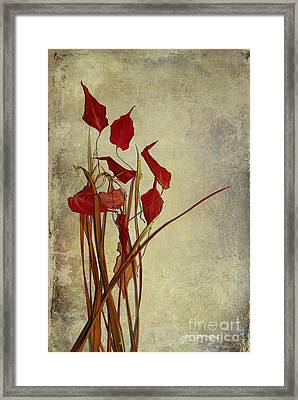 Nature Morte Du Moment T01 Framed Print by Variance Collections