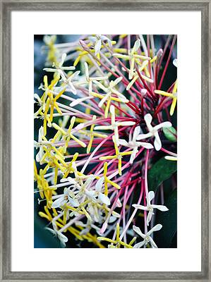 Nature Museum Botanical Framed Print by Kyle Hanson