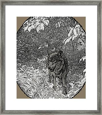 Nature Walk Wolf Framed Print by Debra     Vatalaro