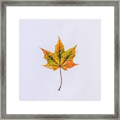 Natures Art Framed Print by Kate Morton