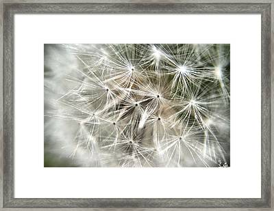 Natures Art Framed Print by Mirra Photography