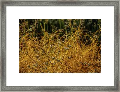 Natures Beautiful Hold Framed Print by Kenneth James