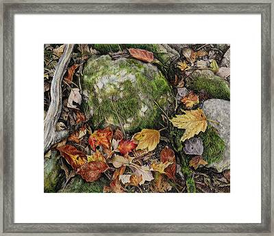 Nature's Confetti Framed Print by Shana Rowe Jackson