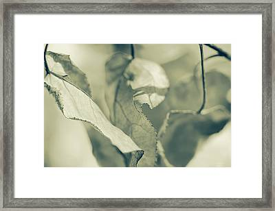 Nature's Leaves Abstract Green Framed Print by Jennie Marie Schell