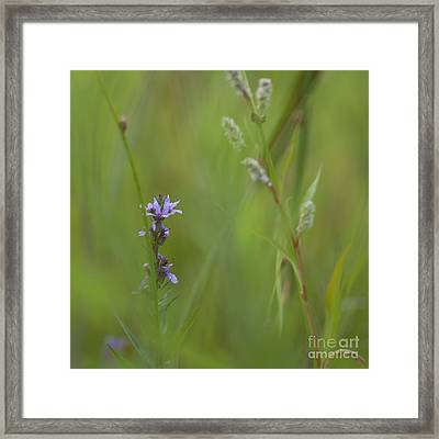 Natures Poetry... Framed Print by Nina Stavlund