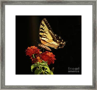 Natures Product Framed Print by Arnie Goldstein