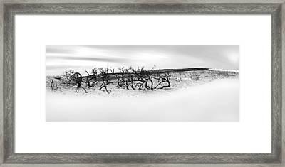 Nature's Remnants Framed Print by Az Jackson