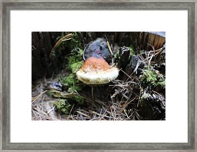 Natures Terrarium Framed Print by Linda Meyer