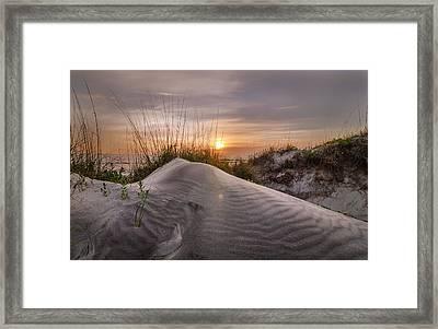 Nature's Work Framed Print by Steve DuPree