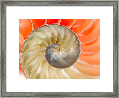 Nautilus Beauty Framed Print by Jean Noren
