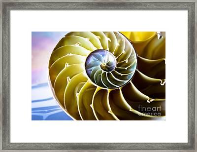 Nautilus Pompilius Framed Print by Colleen Kammerer