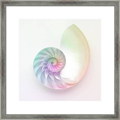 Nautilus Shell Framed Print by Angel Rodriguez