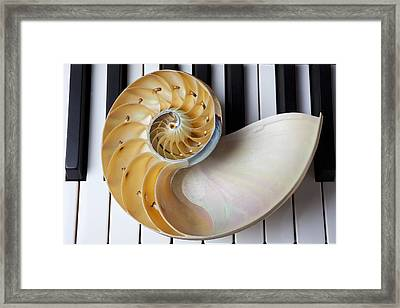 Nautilus Shell On Piano Keys Framed Print by Garry Gay