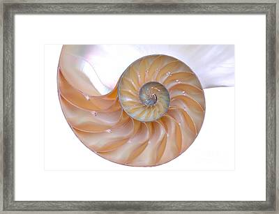 Nautilus Shell Framed Print by Richard Thomas