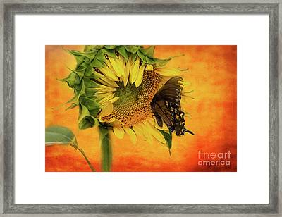 Nectar Time Framed Print by Geraldine DeBoer