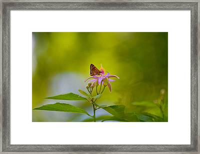 Nectar Treat Framed Print by Az Jackson