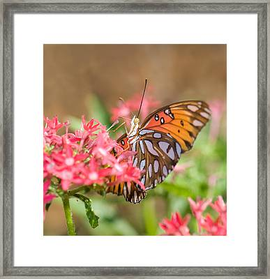 Nectaring Framed Print by Betty LaRue