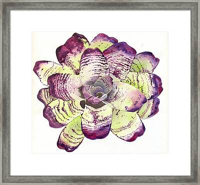 Neoregelia 'freeman's Vision' Framed Print by Penrith Goff
