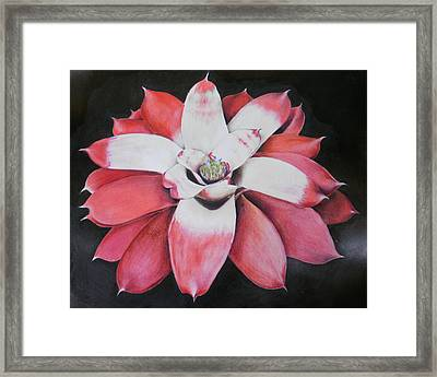 Neoregelia Madam President Framed Print by Penrith Goff