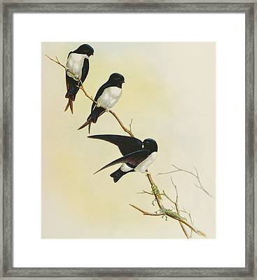 Nepal House Martin Framed Print by John Gould