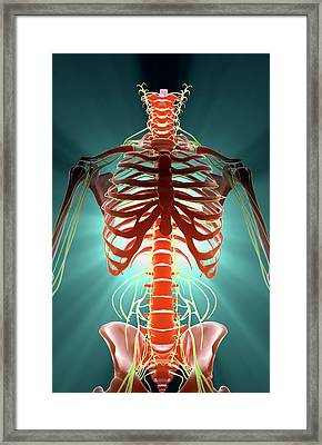 Nerves Framed Print by MedicalRF.com