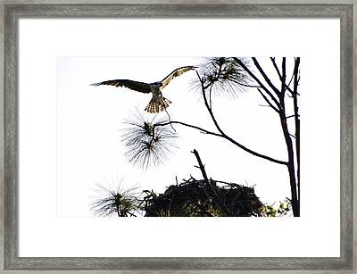 Nest Building Framed Print by Don Youngclaus