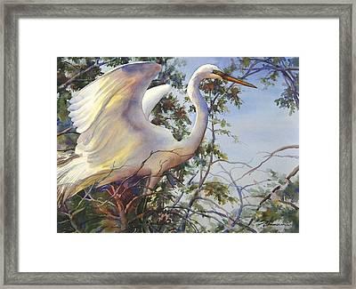 Nesting Egret Framed Print by Sue Zimmermann
