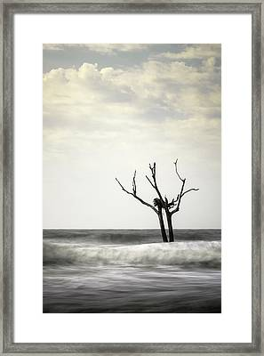 Nesting Framed Print by Ivo Kerssemakers