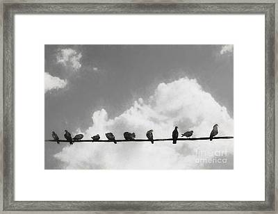 Network Of The Bird Line  Framed Print by Jorgo Photography - Wall Art Gallery