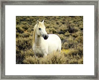 Nevada Wild Horses 3 Framed Print by Marty Koch