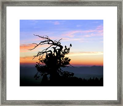 Never Give Up Framed Print by Jim R Stephenson