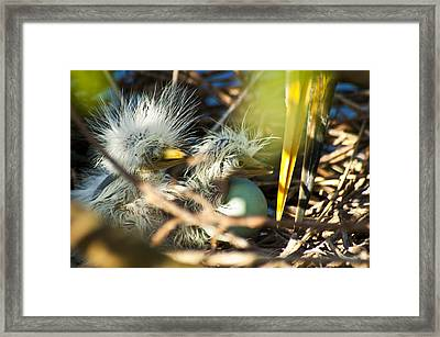 New Arrivals Framed Print by Carolyn Marshall