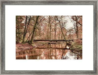 New Forest Framed Print by Svetlana Sewell