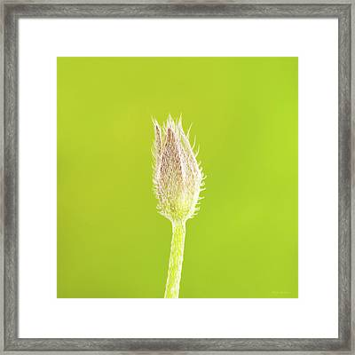 New Life Framed Print by Wim Lanclus