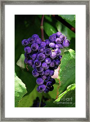 New Wine Framed Print by Constance Woods