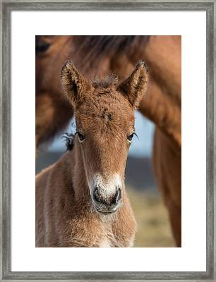 Newborn Foal With Mare Framed Print by Panoramic Images