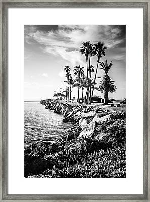 Newport Beach Jetty Black And White Picture Framed Print by Paul Velgos