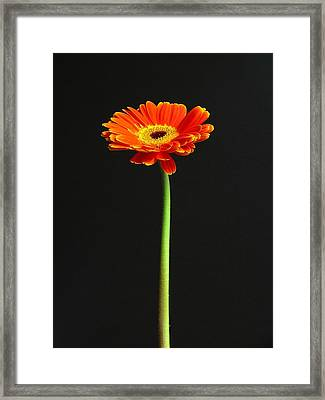 Next American Top Model Framed Print by Juergen Roth