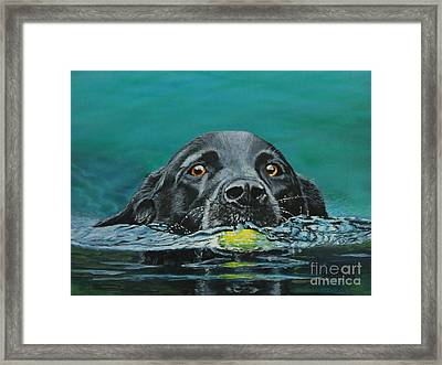 Next Time You Fetch It  Framed Print by Bob Williams