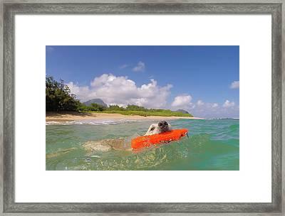 Nice Day For A Swim Framed Print by Steven Lapkin