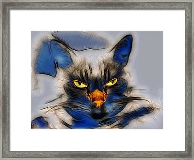 Nice Pussy Cat Framed Print by Irma BACKELANT GALLERIES